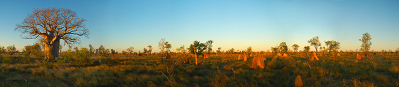 Boab and Termite Mounds, Derby, Western Australia